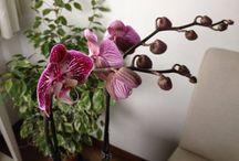 Le mie orchidee / La mia ultima passione!
