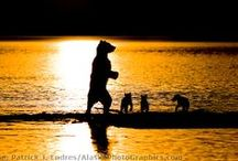 La nature & sa faune / Un endroit où il fait bon de se ressourcer en voyant la tendresse entres les animaux