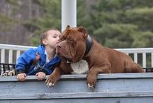 The dog, an excellent accomplice for the child and the human / A well-trained dog is that happiness to humans