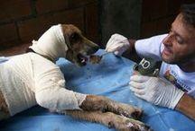 chiens sauvés par l'humain