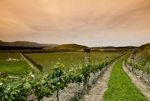 Waitaki Valley • New Zealand's newest wine region