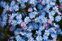 Gardens & Flora / by Natalia Daniels