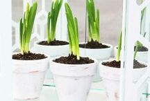 Gardening Tips / Gardening Tips | Gardening Ideas | DIY Gardening Tips |