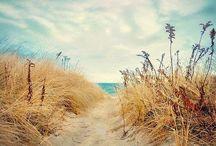 beach / by Karen Rossman