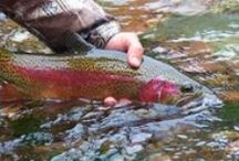 Fishing Quotes, Photos & Videos / The best fly fishing quotes, photos and videos from Fishwest and around the web