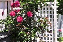 arvores de flores e trepadeiras