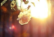 flowers + nature / by Marloes Van Doorn