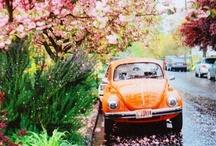 spring / by Marloes Van Doorn