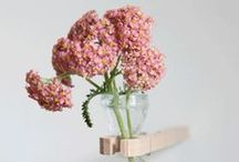 --- FlowerS ---