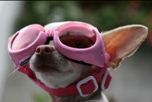 Pet-Jetting Friends Unite! / People are not the only ones who travel. Check out these furry jet-setters.