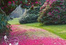 Garden..so many ideas,  / by Mandy Mount