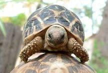 animal...turtle