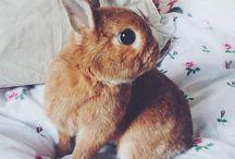 Rabbits / by Susannah Kate