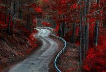 Colors of Autumn... warm red / by Sandy Beck