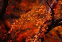 Colors of Autumn...warm orange / by Sandy Beck