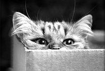 animal...cat