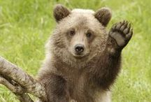 animal...bear