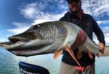 Pike & Muskie Fishing