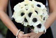 Weddings - Classic and Elegant