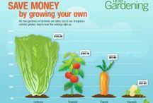 Gardening Advice