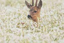 *** Flora & Fauna ***