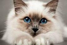 Cats / #cat #animal #pet