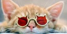 Kitties too... / Just for fun...because we know all of you crazy cat lovers would like to have cats as cool as these!