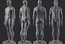 Anatomy / Referencje dotyczące anatomii