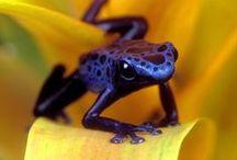 Biodiversité inspirante