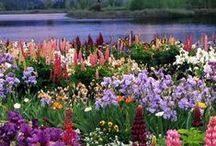 Flores y lugares con encanto