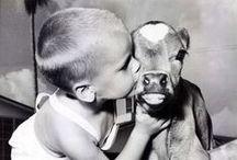 Precious / by Cattle Empire
