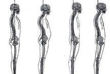 PT & Anatomy