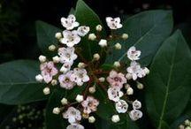 Garden & Plants / Medicinal, Edible, Ornamental and Permaculture