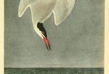 Surfin' Bird / Bird illustrations / by Pandora's Hat