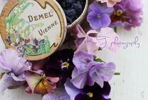 Flowers - Violets love