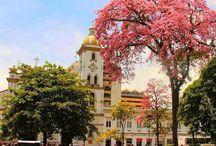 Ibagué - Tolima - Colombia / Ciudad Musical de Colombia
