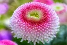Stunning Blooms / Flowers that make you take a second look