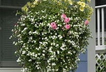 Thrillers and Spillers / Plants for your containers