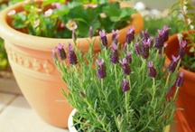 The Small Spaces / All about growing flowers and vegetable plants in containers and hanging baskets
