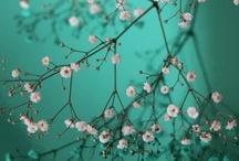 Flores 1 / Hasta #50