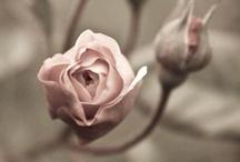 Flores 2 / Hasta #50