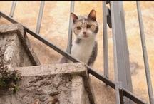 cats / Amazing Royal Cat