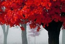 Autumn Colors / The ever-changing display of fall beauty!