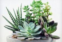 .. plants ..