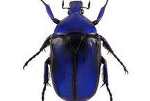 Insects - Gogga's - creepy crawlies