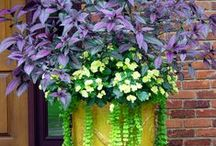 Flowering Combos / Flower combinations ideas for container gardens