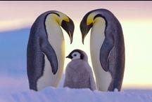 pinguini!!