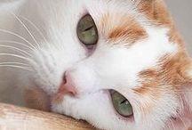 cat / by Nesroshka Sandy