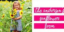 Family Photos / Have some family photos coming up? Get some inspiration from these pins!