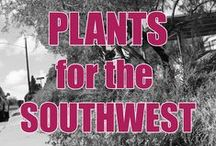 NM bombproof plants / Xeric and drought tolerant plants for our changing climate. Xeriscape and low water use plants for the southwest.